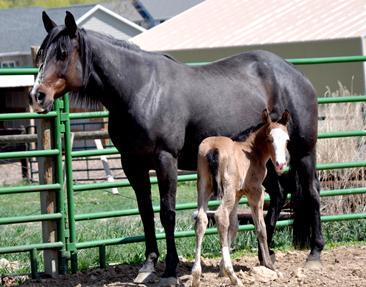 horse-star