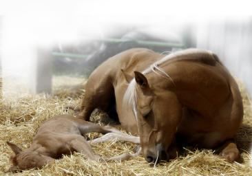 horses-dally